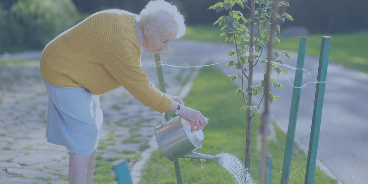 An elderly woman in a yellow sweater watering a tree using a watering can.